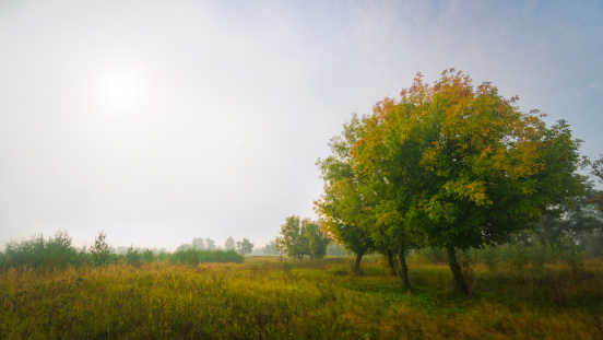 Several Trees In Field At Misty Sunrise Stock Photo - Download Image Now