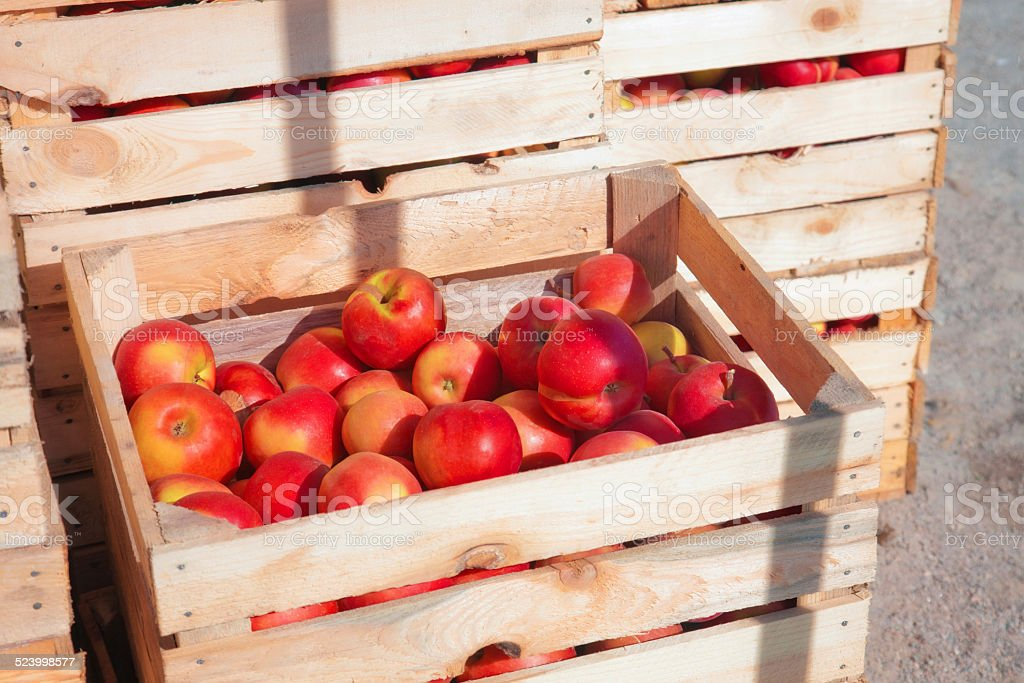 Several wooden boxes with red apples stock photo