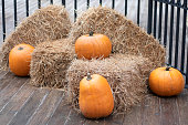 Several yellow pumpkins lie on hay bales. Pumpkin autumn, concept of Halloween and autumn harvest festival. Farm green product.