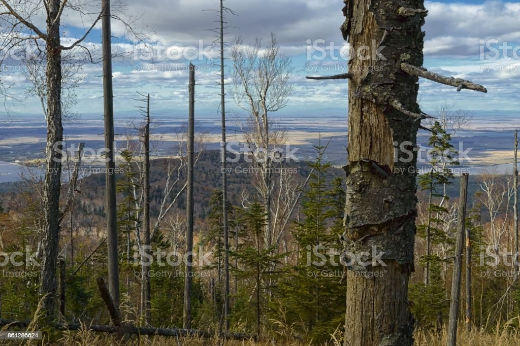 Severe far Eastern taiga royalty-free stock photo