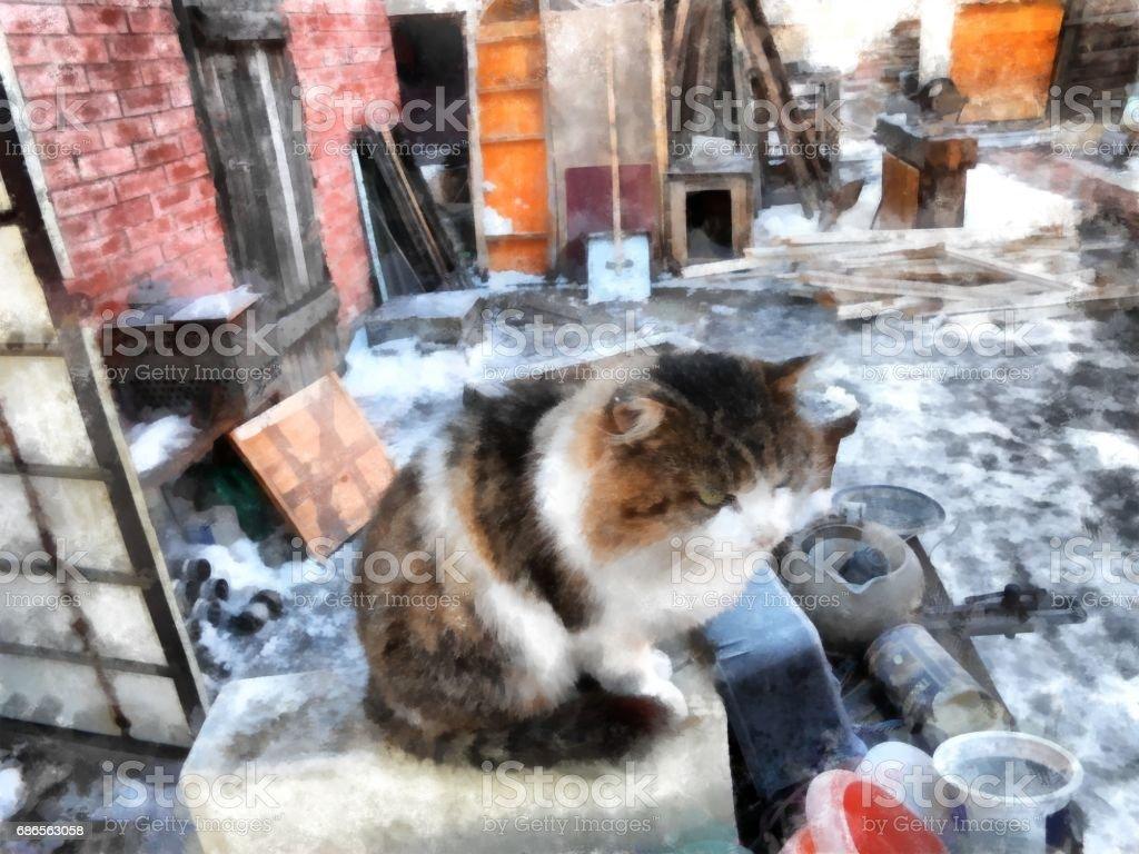 Severe Siberian harsh rural cat examines the  territory of domination foto stock royalty-free