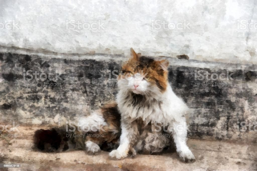 Severe Siberian harsh rural cat examines the  territory royalty-free stock photo