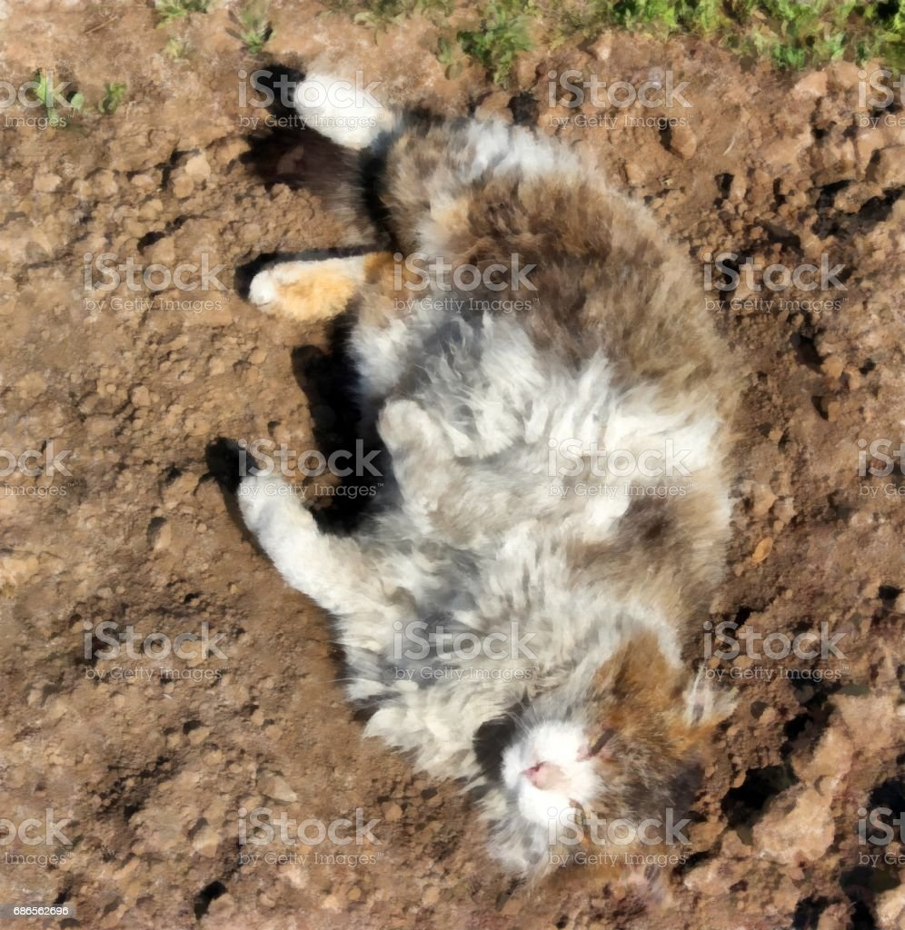 Severe Siberian rural cat  lies on a freshly scraped bed royalty-free stock photo