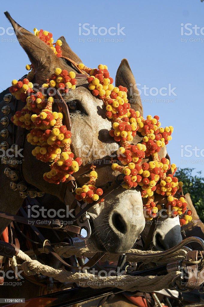Sevillian Feria Horses royalty-free stock photo