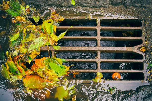 Sewer grate with fallen leaves after autumn rain stock photo