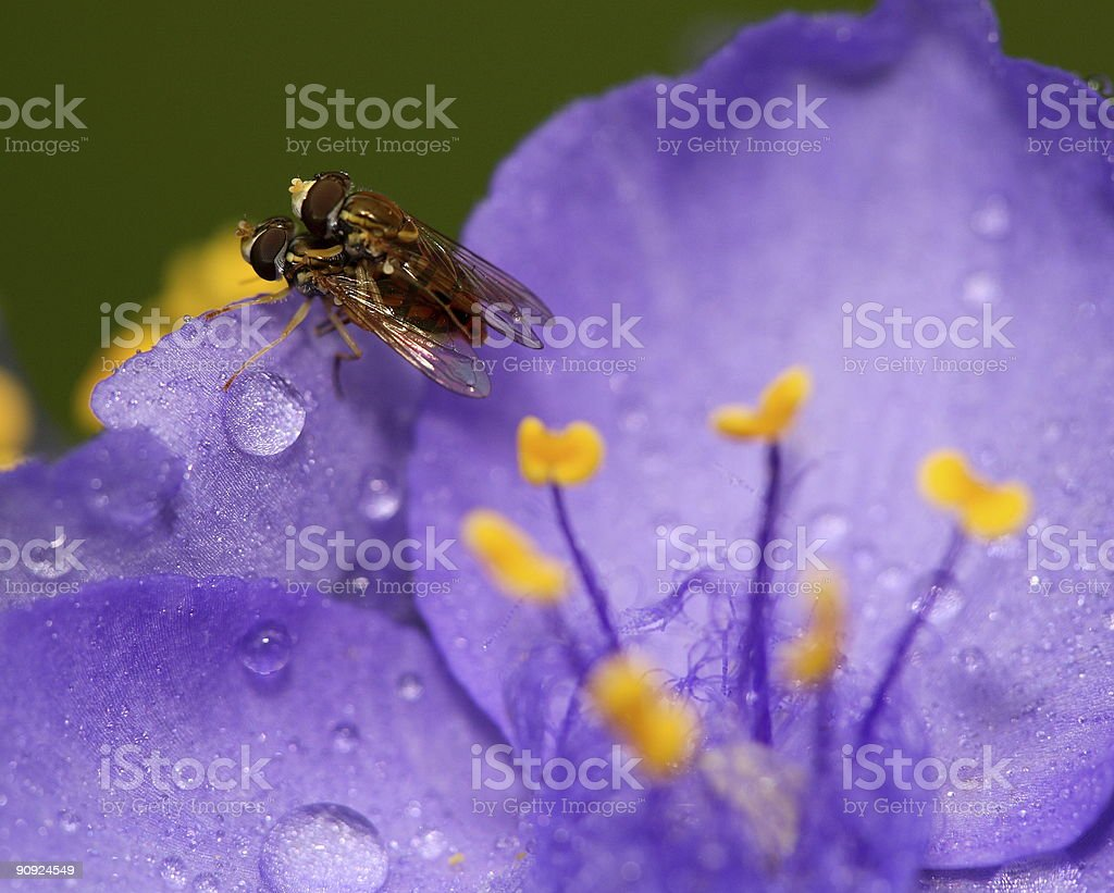 Sex with flies stock photo