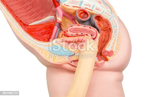 istock Sexual human intercourse penis and vagina model 504460722