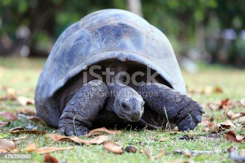 Seychelles giant tortoise on Moyenne Island, Seychelles