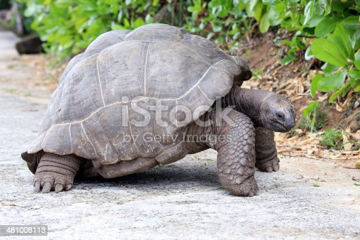 Seychelles Giant Tortoise on La Digue Island, Seychelles