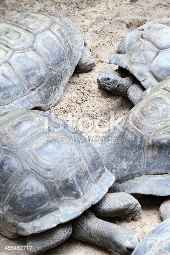 Seychelles Giant Tortoises on La Digue Island, Seychelles