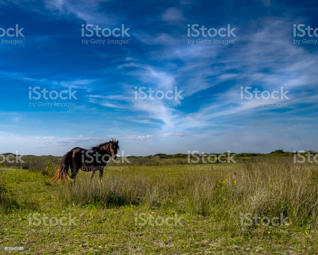 Shackleford Pony stock photo