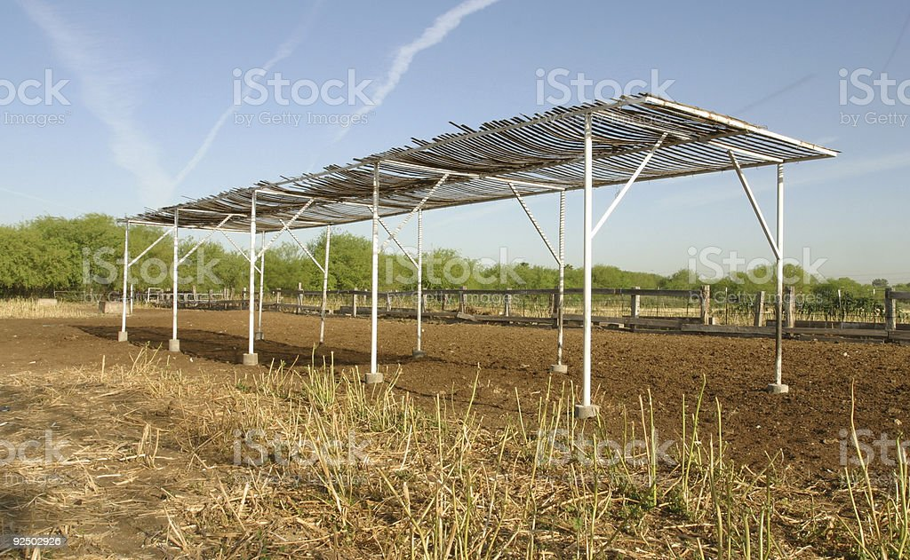 Shade for Cows and Horses royalty-free stock photo