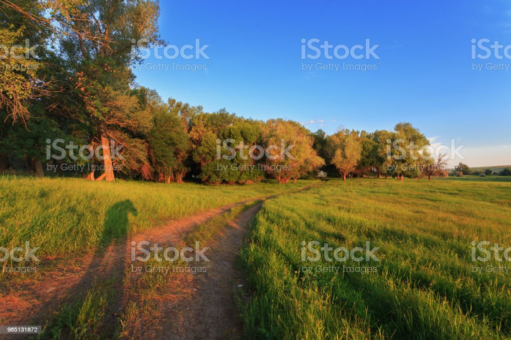 Shade landscape photographer from the light of the morning sun. Rural dirt road, green grass and trees in field zbiór zdjęć royalty-free