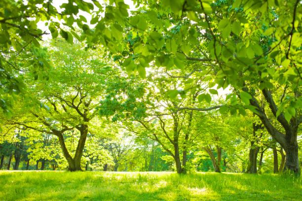 庭の木の陰 - 木漏れ日 ストックフォトと画像