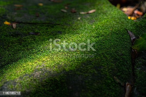 Shade of light bright up the green moss on the rock.