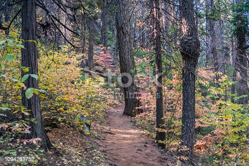 istock Shaded trail lined up with colorful dogwood, Calaveras Big Trees State Park, California 1094281752