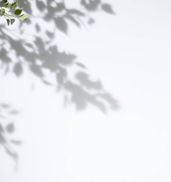 skuggad vit bakgrund i ett träd - skuggig bildbanksfoton och bilder