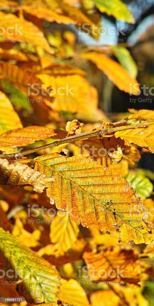 Farben des Herbst – Foto