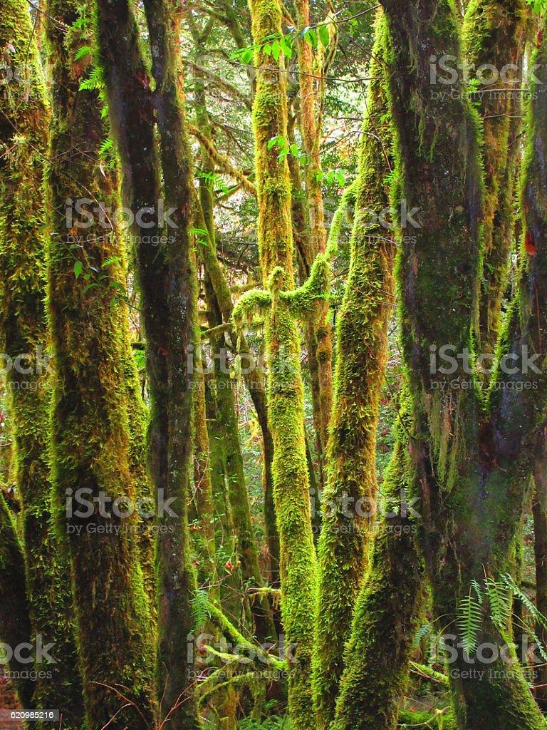 Tons de verde foto royalty-free