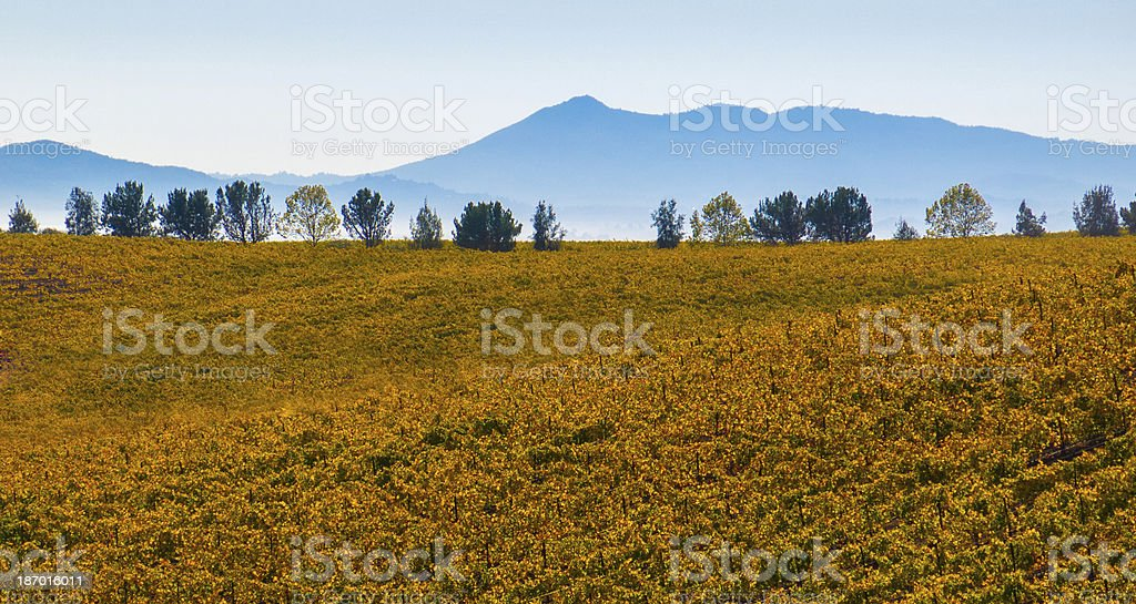 Shades of Wine Country Harvest royalty-free stock photo