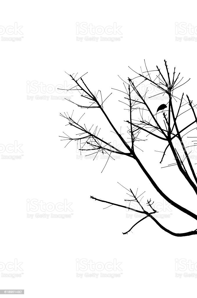 Shadow bare branches on a white background. stock photo