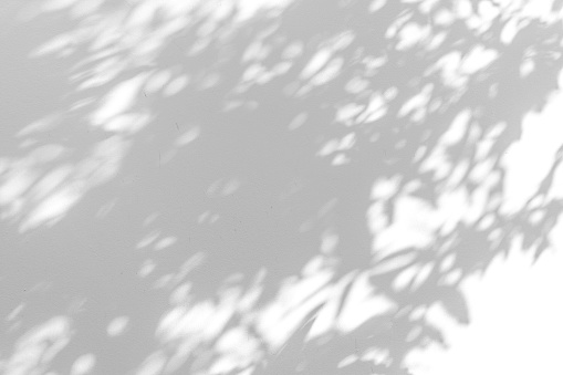 Shadow blur of the leaves on white wall abstract background.