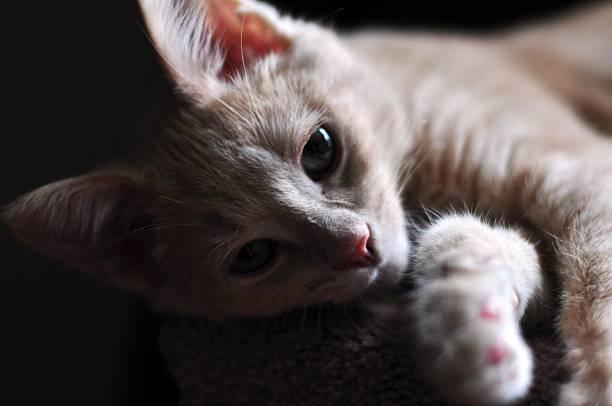 Shadow cat – Foto