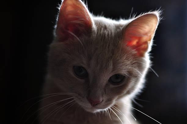 Shadow Katze (2) – Foto