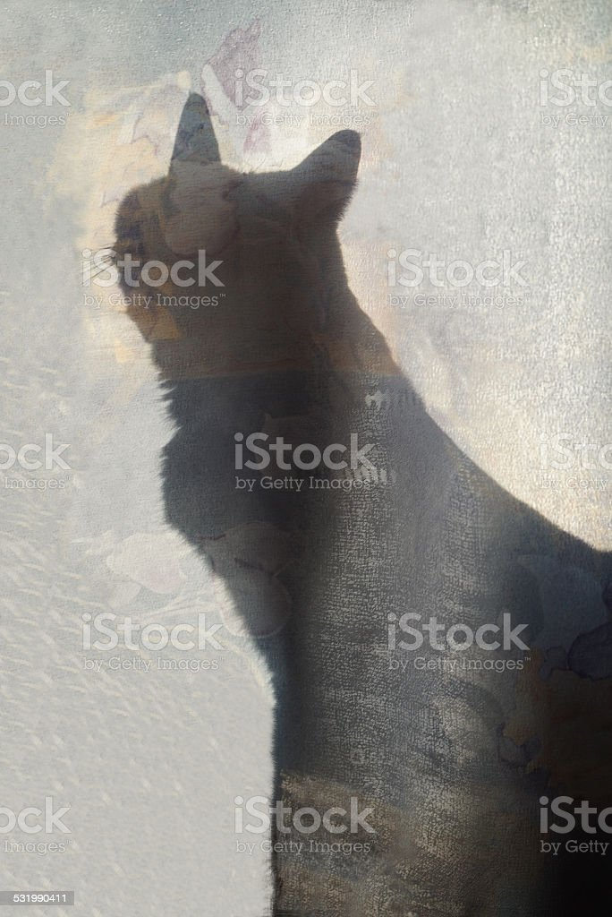 Shadow Cat stock photo