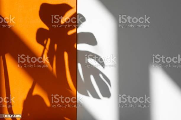 Shadow from monstera monstera in the sun beautiful combination of picture id1169084486?b=1&k=6&m=1169084486&s=612x612&h=tb0g xnmc 0yjptd4usw0ldxj6j oklqahbtfklixyw=