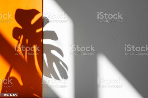 Shadow from monstera monstera in the sun beautiful combination of picture id1169733300?b=1&k=6&m=1169733300&s=612x612&h=skzt6p9ymbtc 1d8ivle3bsafhvwtoou8qewnd1ooki=