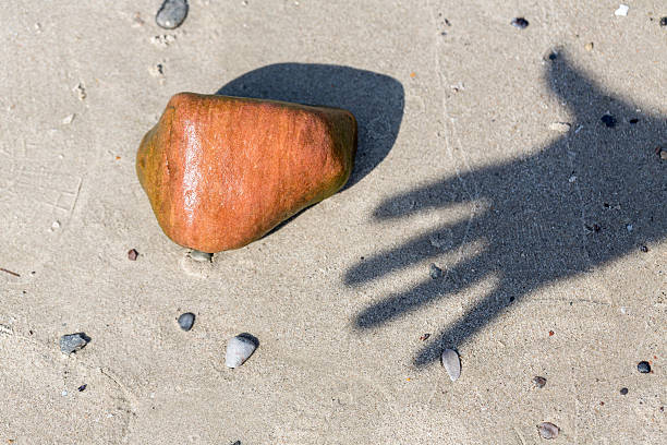 shadow of a hand and wet pebble at the beach stock photo