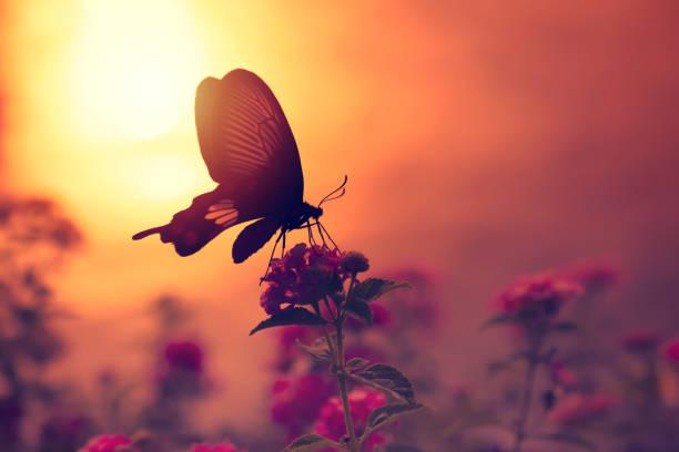 Schatten der Schmetterling auf Blumen mit Sonnenlicht Reflexion von Wasser im Hintergrund. – Foto