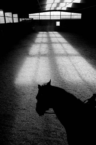 Shadow of Horse in Riding Ring stock photo