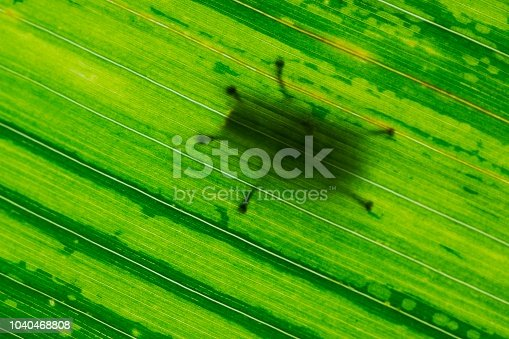 Shadow of insect's legs on bright green leaf.