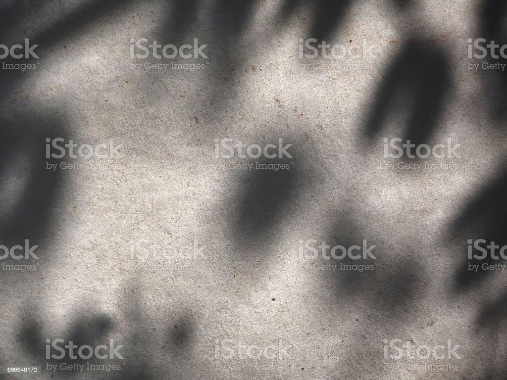 Shadow of leaves photo libre de droits