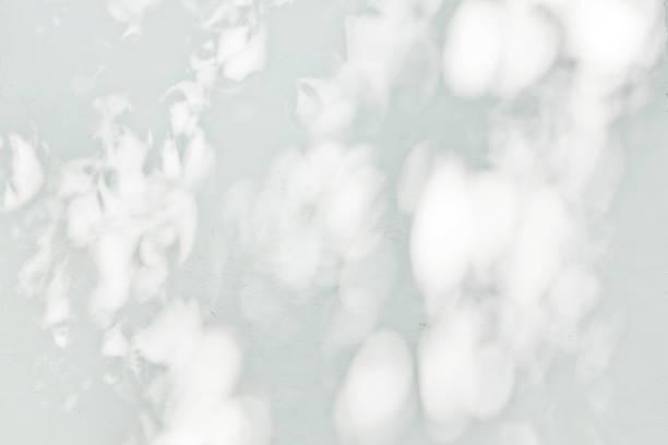 白い壁に映る葉の影 ストックフォト