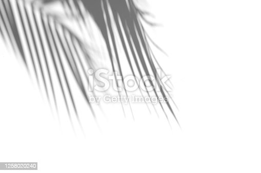 Shadow of palm leaf on white background. Abstract neutral tropical concept. Shadow overlay. Copy space.