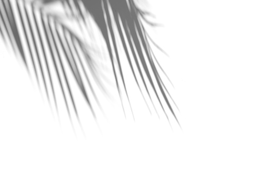 Coconut Palm Trees Under Blue Sky