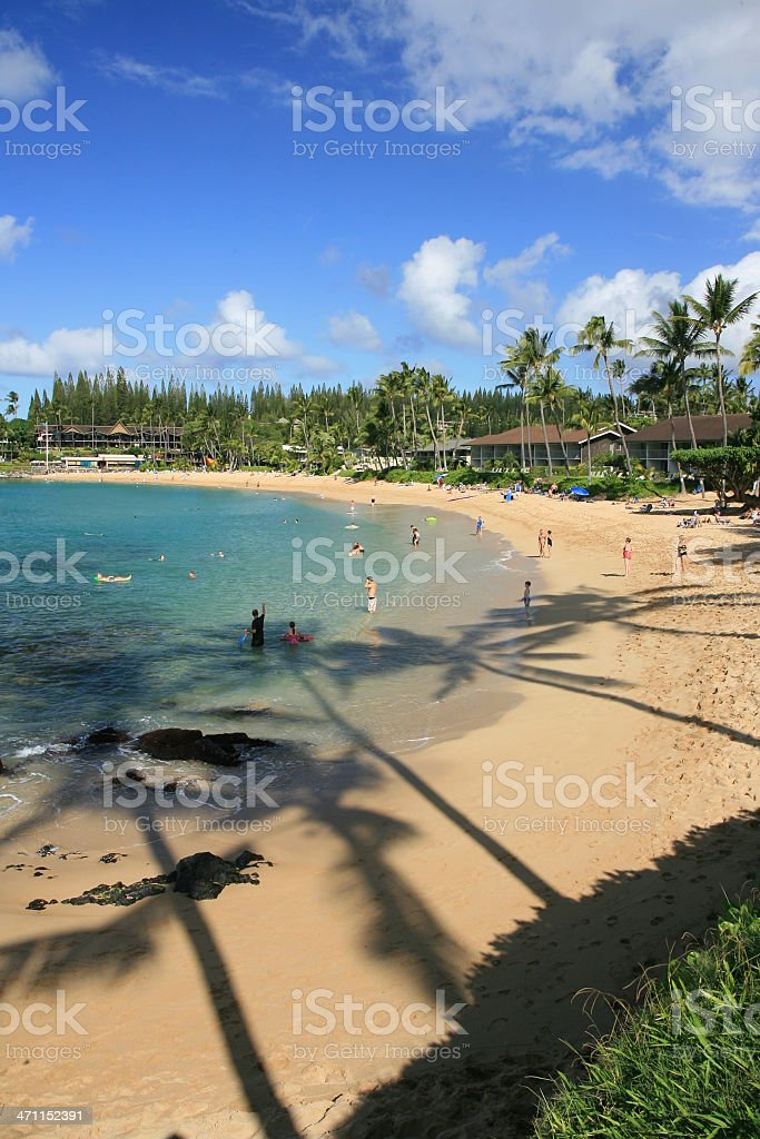 Shadow of Palms stock photo