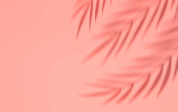 shadow of tropical palm leaves on the wall. summer tropical leaf. exotic hawaiian jungle foliage, summertime background. minimal style. 3d render - тень стоковые фото и изображения