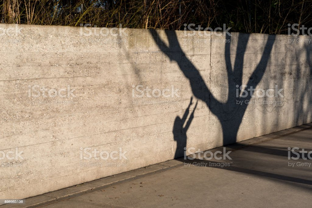 Shadow on the wall of a woman and a tree. stock photo