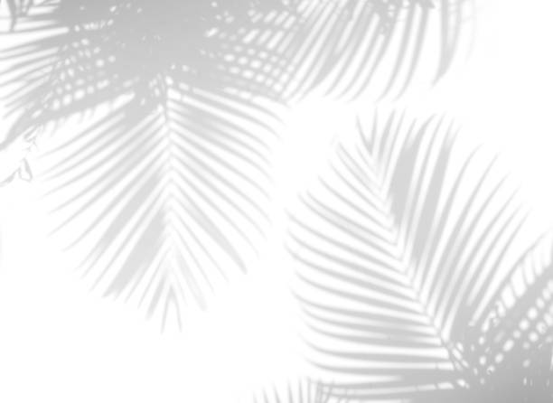 shadow palm leaves stock photo