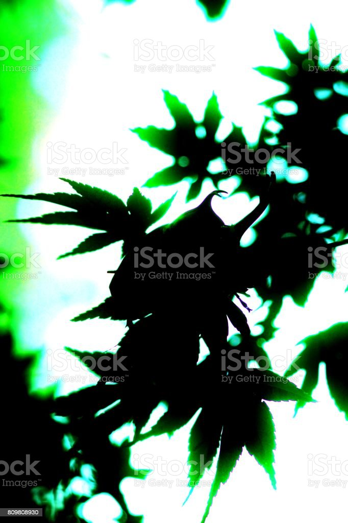 Shadow Picture stock photo