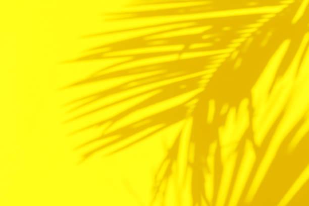 Schattensilhouette von schönen gefiederten Palmblatt im Sonnenlicht auf strahlend sonnengelber Farbwand Hintergrund. Sommer Tropenurlaub kreative Konzept. Urbaner Dschungel Entspannung der Ruhe – Foto