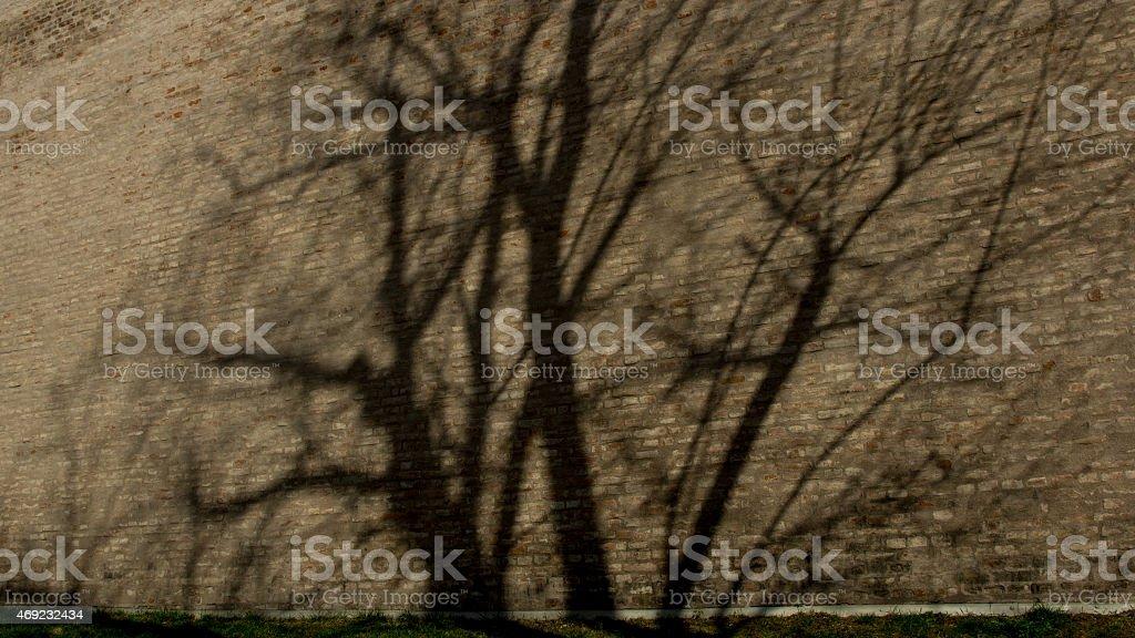 Shadow tree on the brick wall stock photo