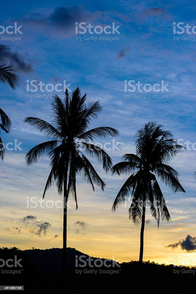 Shadow trees background sky at sunset. stock photo
