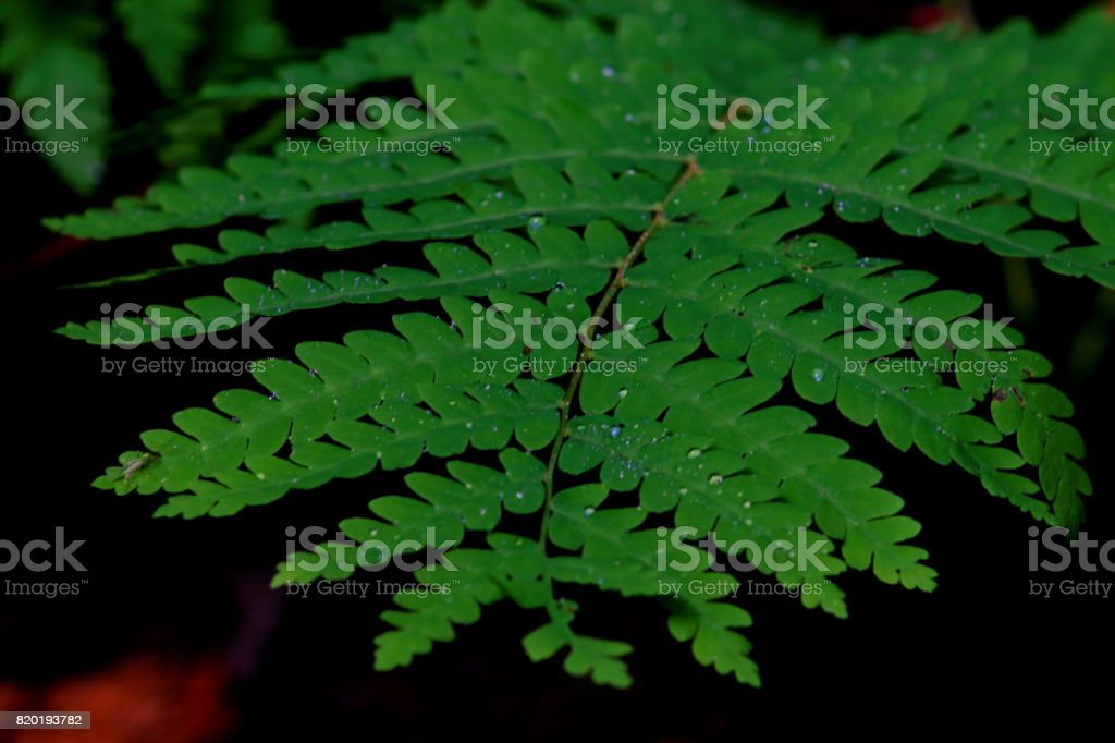 Shadow tunnel in ferns stock photo