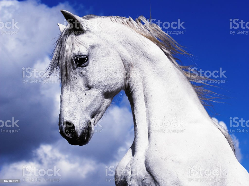 Shadowfax White Horse On A Blue Sky Clouds royalty-free stock photo