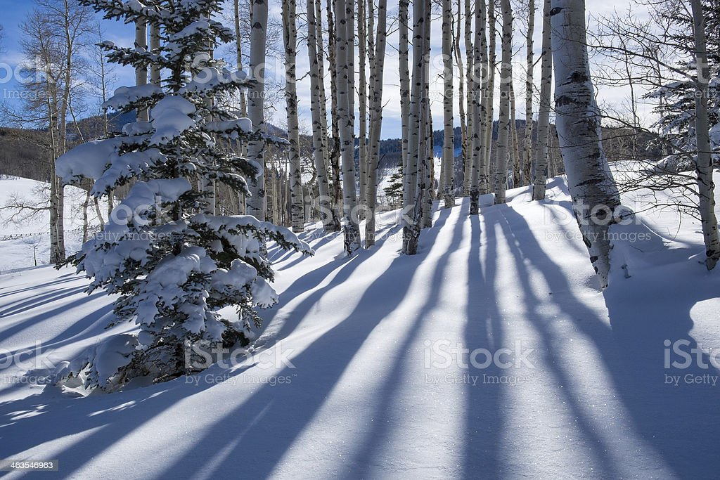 Shadows and Aspens Winter Mountain Landscape stock photo